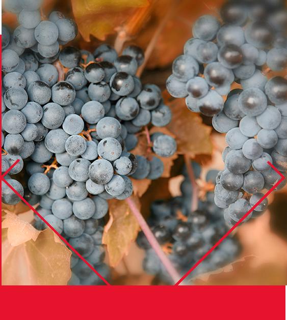 ramon_bilbao-cuadro-uvas