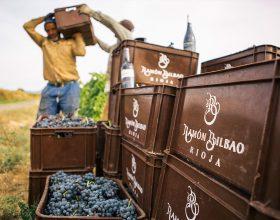 Recogida de uvas del vino Ramón Bilbao