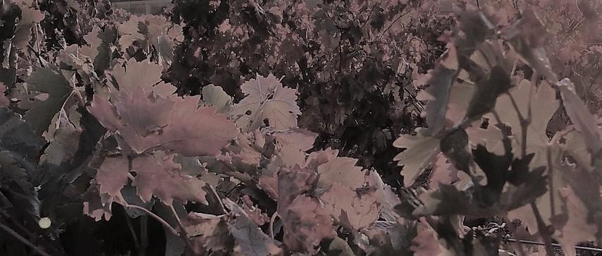 Plan gastro otoño y vino